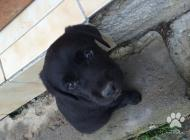 Inzercia psov: Krásne, krížené štenia...