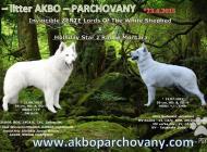 Inzercia psov: Biely švajčiarsky ovči...