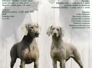 Inzercia psov: Štěňata Weimarského st...