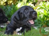 Inzercia psov: Nabízíme k prodeji ště...