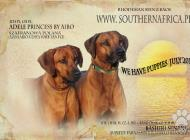 Inzercia psov: šteniatka plemena Rhod...