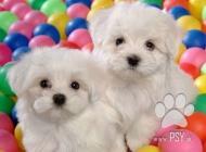 Inzercia psov: hygienicky vyškolení m...