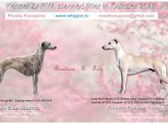 Inzercia psov: Whippet puppies