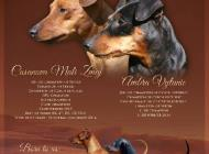 Inzercia psov: Štěňata trpasličího pi...