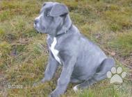 Inzercia psov: Kto daruje/predá Cane ...
