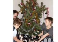Inzercia psov: Štěňátka Appenzellský ...