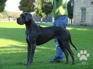 Inzercia psov: Prodej štěňat německá ...