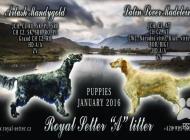 Inzercia psov: Překrásné štěně anglic...