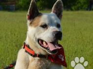 Inzercia psov: Rony hľadá nový domov!