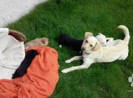 Inzercia psov: fenky křížence