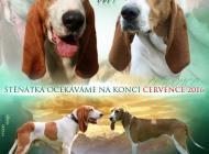 Inzercia psov: Švýcarský honič - Švyc...