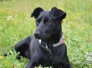 Inzercia psov: Malinká Marney hľadá n...