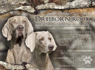 Inzercia psov: Weimarský stavač – šte...