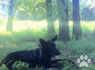 Inzercia psov: Darujem - do dobrých r...