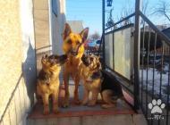 Inzercia psov: predám