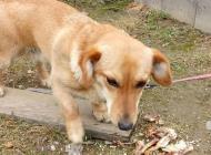 Inzercia psov: Darujeme psa