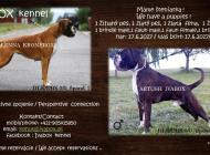 Inzercia psov: Šteniatka nemeckého bo...