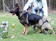Inzercia psov: Německý ovčák s průkaz...