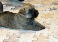 Inzercia psov: Krásne šteniatka kern/...