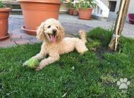 Inzercia psov: Strata PSÍKA
