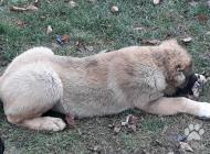 Inzercia psov: Predam krásne šteniatka