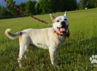 Inzercia psov: Rony X pittbulla- poho...