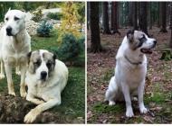 Inzercia psov: Štěňata - Prodej - Stř...