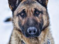 Inzercia psov: KEVIN hľadá domov