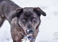 Inzercia psov: PEDRO hľadá domov