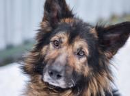 Inzercia psov: MACO hľadá domov