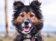 Inzercia psov: FILIP hľadá domov