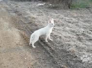 Inzercia psov: šteniatka