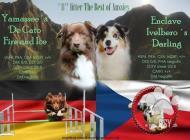 Inzercia psov: PLÁNOVANÝ ZAHRANIČNÍ V...
