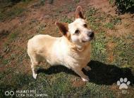 Inzercia psov: Ester- milujúca kľudná...