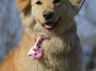 Inzercia psov: Blanka