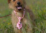 Inzercia psov: Annie