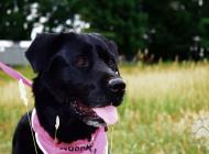 Inzercia psov: Rita- rada sa mojká a ...