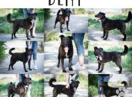 Inzercia psov: DENY