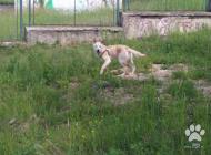 Inzercia psov: mily psik