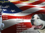 Inzercia psov: Americký bulldog