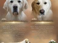 Inzercia psov: Přijímáme rezervace na...
