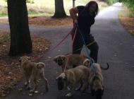 Inzercia psov: Rychlý odběr - výrazná...