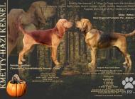 Inzercia psov: Bloodhound