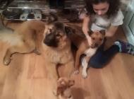Inzercia psov: 14mesačná fenka