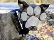 Inzercia psov: Trend krásny čierny kr...