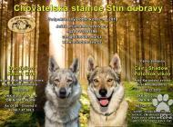 Inzercia psov: Rezervace štěňat česko...