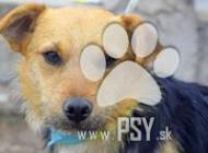 Inzercia psov: Ibino milučký psíček d...