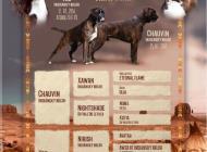 Inzercia psov: predám šteniatka nem. ...