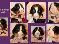 Inzercia psov: ponúkame šteniatka