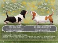 Inzercia psov: Ponúkam na predaj šten...